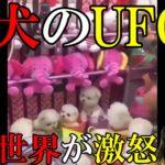 生きた子犬をUFOキャッチャーする映像に全世界が激怒! 投稿者は日本と主張?[令和TV闇ニュース]
