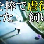 【中国】飼い犬を虐待○させる飼い主! ピットブルを銃○した警官[令和TV闇ニュース]