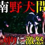 山口県周南市の野犬問題に警笛! 地元で囁かれる野犬狩りの実態とは?